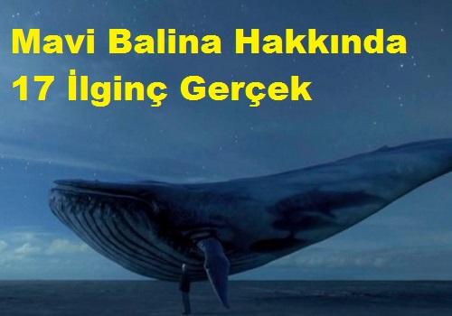 Mavi Balina Hakkında 17 İlginç Gerçek