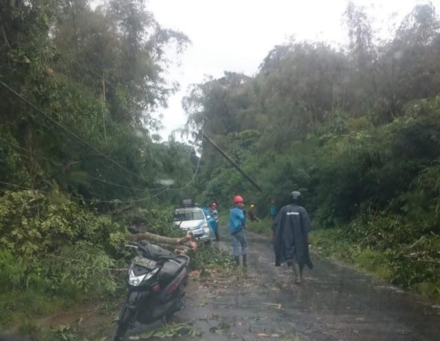 Hujan Deras ! Lagi,  Satu Pohon Tumbang Dijalur Liwa-Sukau