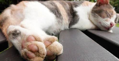 Safe Nail Treatment for Cat