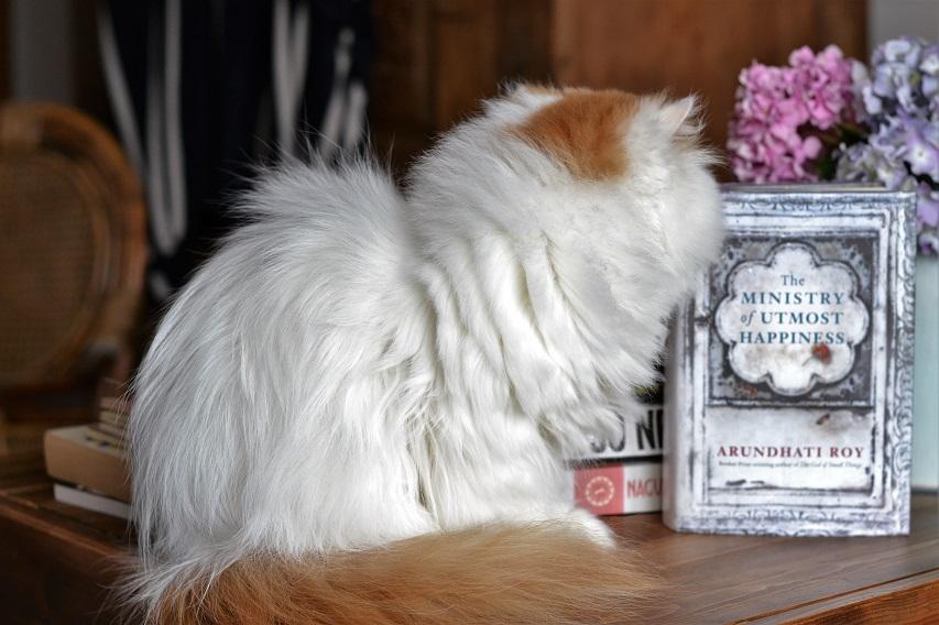 № 11 reading list | Arundhati Roy and my Persian cat · Lisa Hjalt