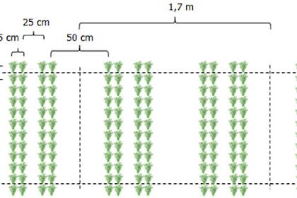 Meningkatkan hasil panen padi hingga 15 ton/ha dengan sistem tanam Jajar Legowo Ganda