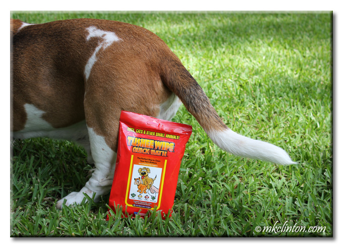 Back of Basset Hound with Tushee Wipes