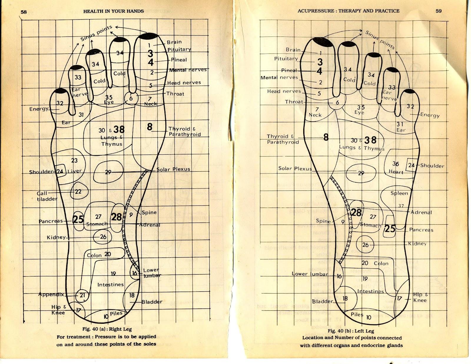 Foot Massage Therapy Diagram Pbt Gf30 Wiring Acupressure