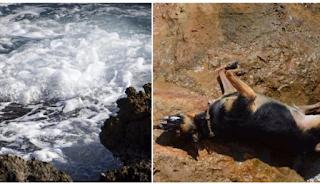 Πάρος: Έδεσαν πέτρα στο λαιμό σκύλου και τον πέταξαν στη θάλασσα