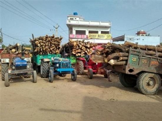 वन विभाग के अधिकारी करवा रहे हैं हरे भरे पेड़ों का क़त्ल