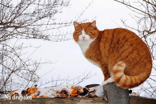 Czym są odstraszacze kotów?