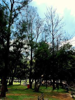 Árvores no Horto Florestal de São Paulo