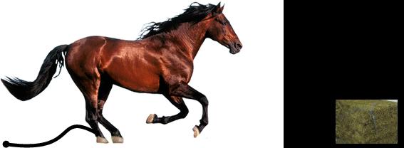اكيد أن الحصان مربوط لكنه غير مربوط من الطرف الاخر