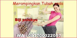 http://www.jualbijipolokyo.com