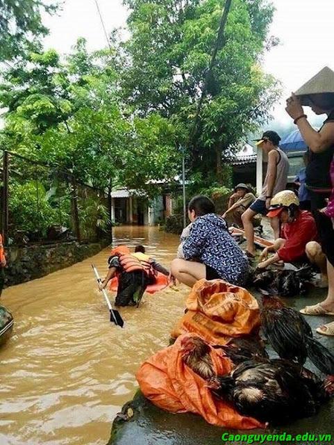 Mưa lũ ở Hà Giang