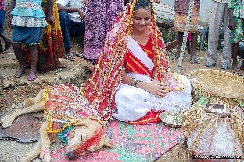 Berkahwin dengan binatang