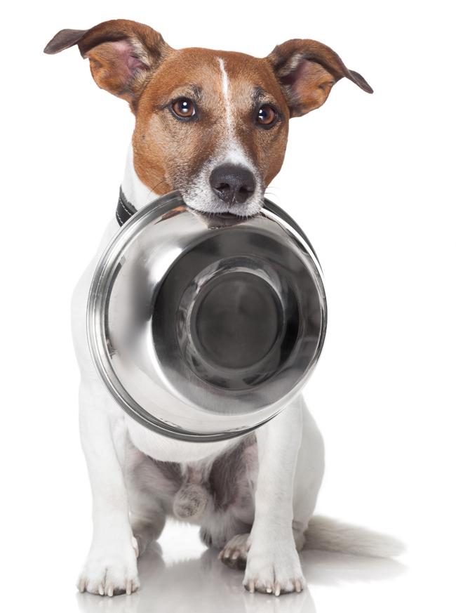Dieta BARF dla psa