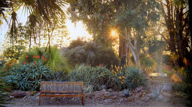 Un libro y un jardín seco ejemplar: The Bold Dry Garden. Lessons from the Ruth Bancroft Garden