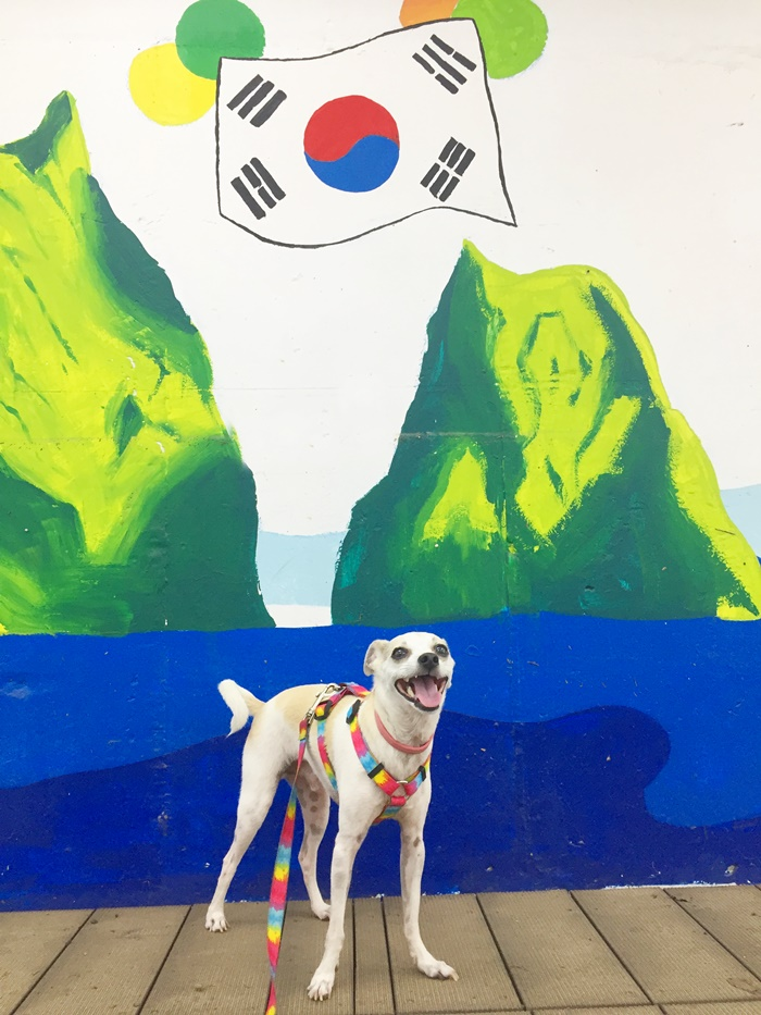 How to Take your Dog to Korea from America