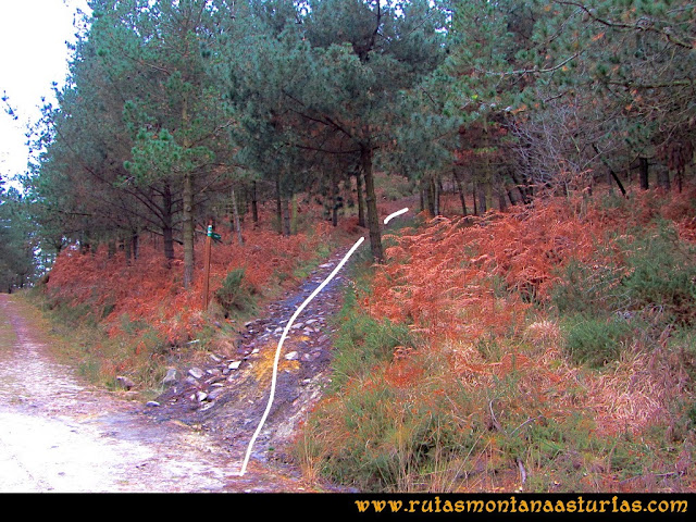 Rutas Montaña Asturias: Ruta al Pico del Pedroso