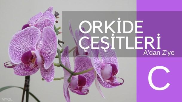 Orkide Çeşitleri C Harfi İle Başlayan Orkideler