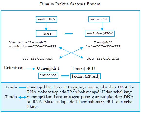 makalah sintesis protein