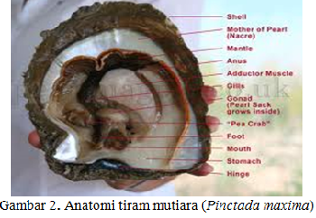 Indonesia putih abu abu ml di warnet - 4 1