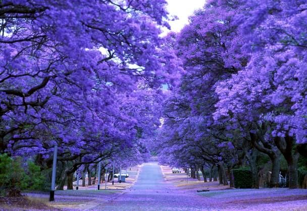 Miss Purple