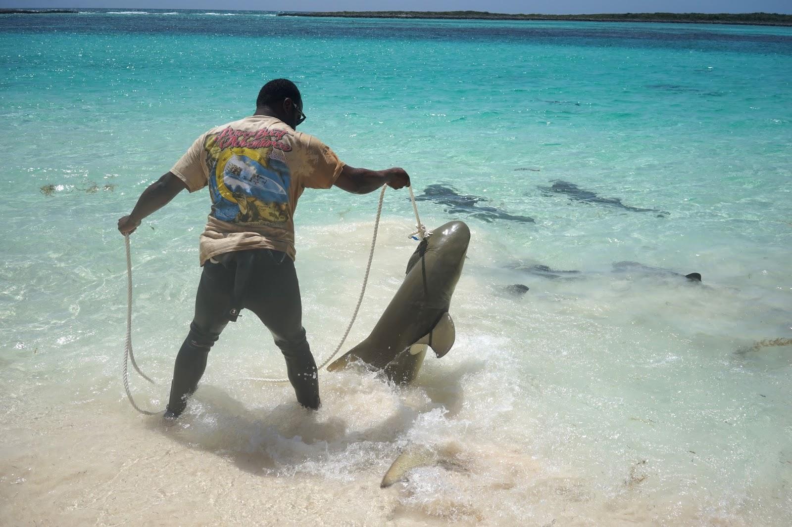 swimming with sharks bahamas
