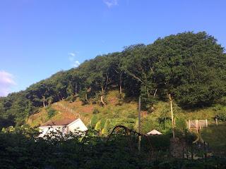 The ridge of Oak woodland at Blackmill by Gethin Jenkins-Jones