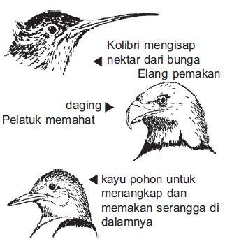 Ciri-ciri Makhluk Hidup Beserta Contoh dan Gambarnya Lengkap