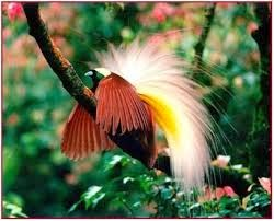 6700 Koleksi Gambar Fauna Peralihan Dan Keterangannya Gratis