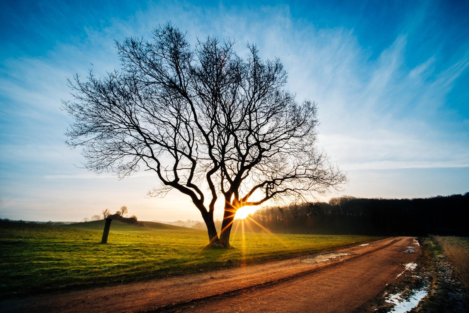 Дерево на закате, автор Джонас Раск