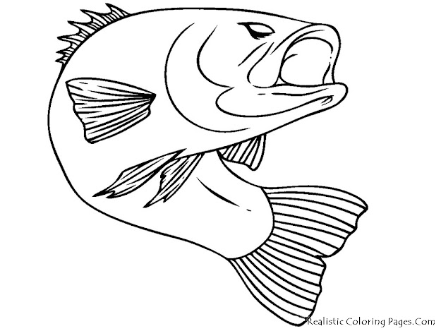Fish  Bass Fish Realistic Coloring Pages