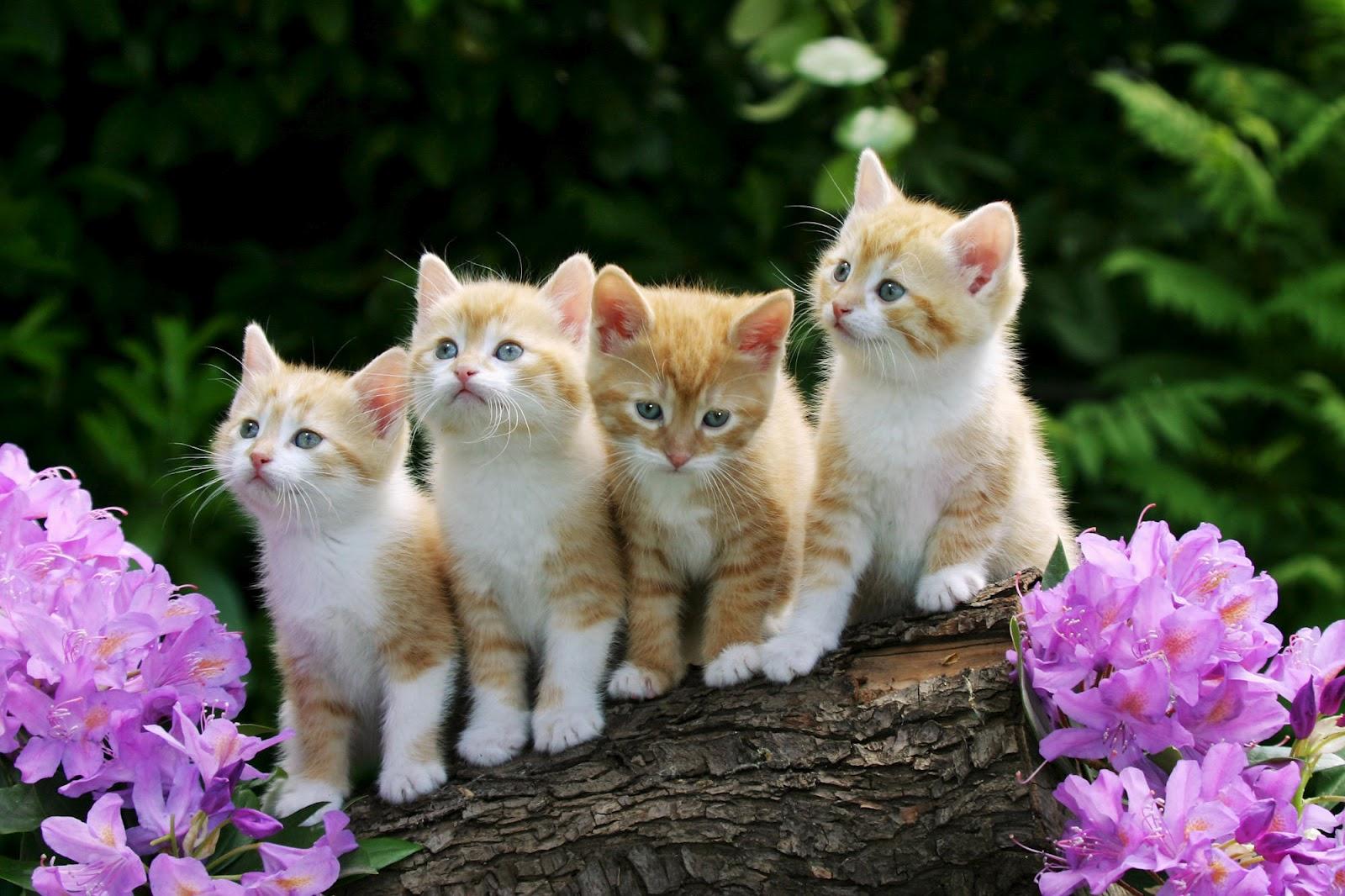 Foto Lucu Bergerak Kucing Terlengkap Display Picture Unik