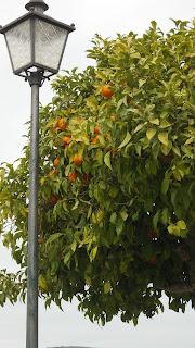 propiedades medicinales de la naranja amarga