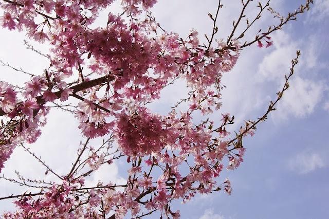 春日城址公園