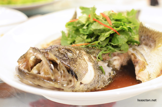 Steamed Live Sea Grouper with Sliced Ginger and Chili