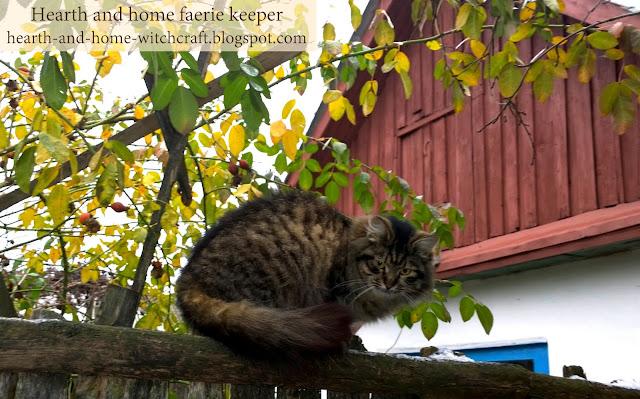 Беларусь, Гомель, зима, осень, лето, фотография, природа, сад, котики, манул, шиповник, аномальное, погода, снег, зелень, зимовье