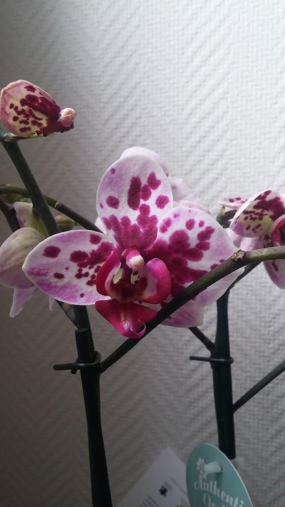 petites astuces de maman une orchid e avec les fleurs florajet. Black Bedroom Furniture Sets. Home Design Ideas