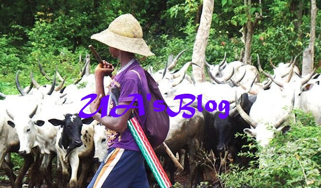 BREAKING!!! Fulani Herdsmen Blow Hot Over Killings Of Nigerians In Zamfara, Kaduna