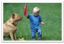 Pero si usted tiene césped artificial, a continuación, sus perros no serán capaces de cavar aunque