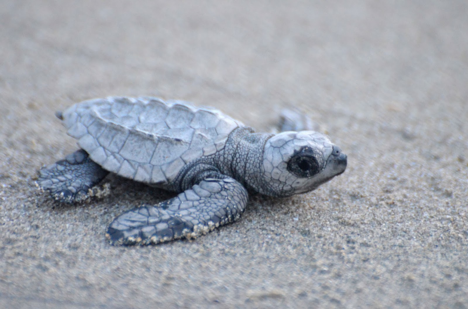 The Sleeping Turtle | College, Cerebral Palsy, Family, Life  |Baby Sea Turtles