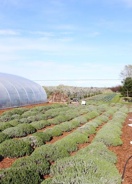 Gardening in Scripture | Land of Honey
