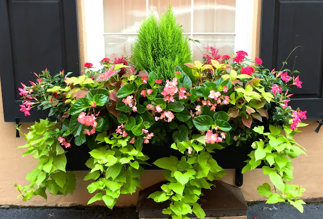 how to plant a window box various heights cascading vines quick growing southern