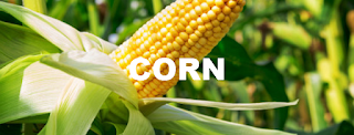 CME CBOT: ZC Corn Futures Trading Strategy Today - Corn price Long-term forecast and trade ideas