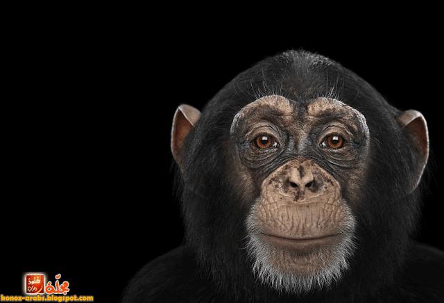 صور غريبة و مذهلة لحيوانات تأخذ صورة شخصية !