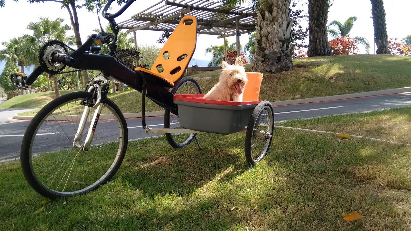 Miranda II Bike de madeira IMG_20160802_121232995