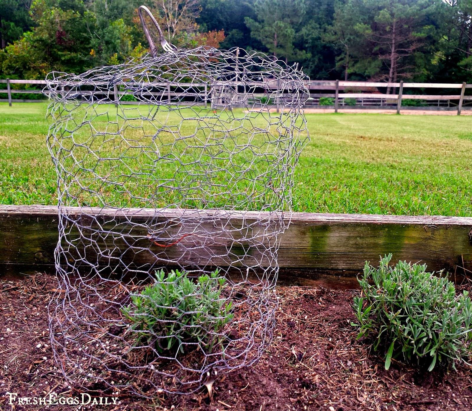 How To Make A Chicken Wire Garden Cloche  Fresh Eggs Daily®