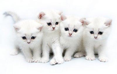 Cute Cats 2 Cute Cats