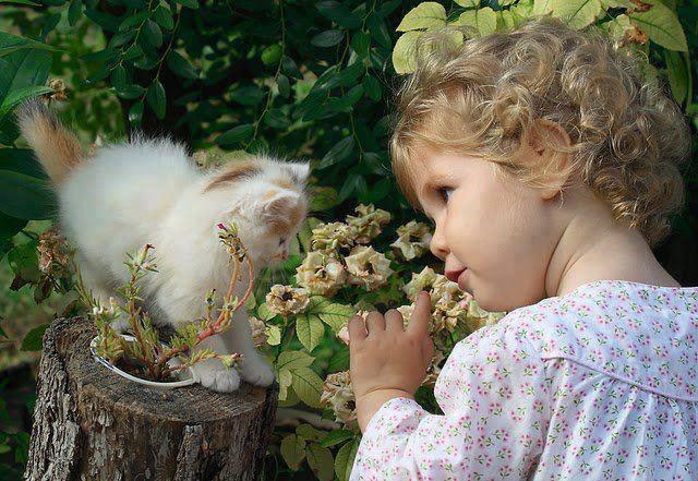 Gatitos con Niña y Flores