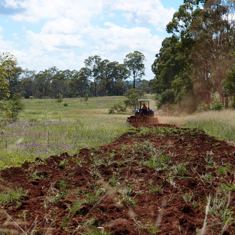 eight acres: planting a perennial pasture