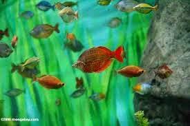 Arco Iris Rojo