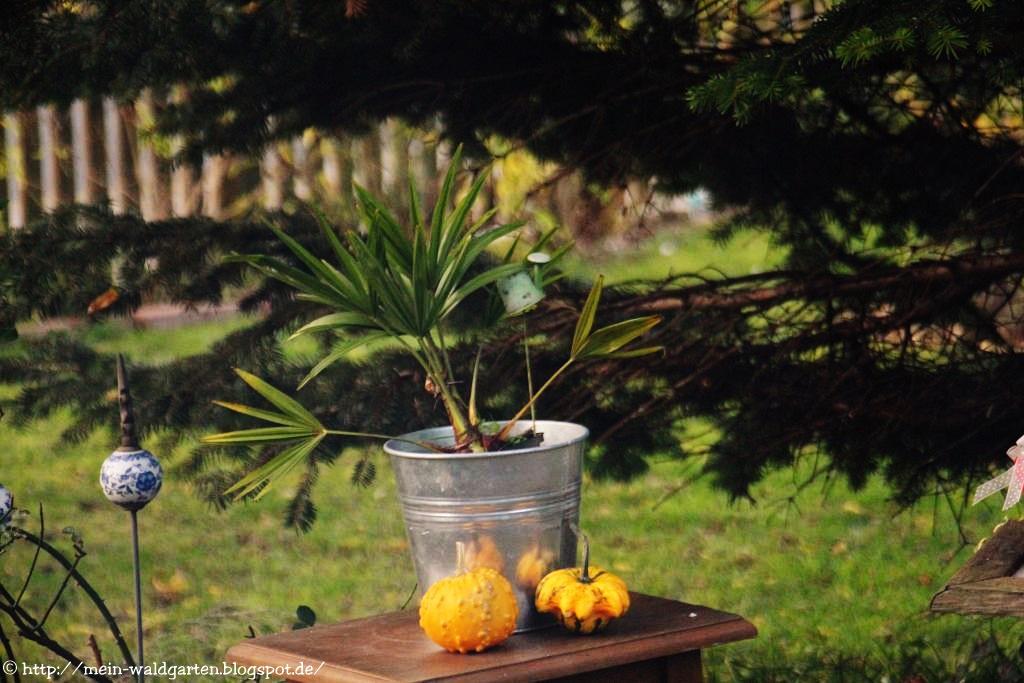 mein waldgarten meine palme steht noch drau en. Black Bedroom Furniture Sets. Home Design Ideas