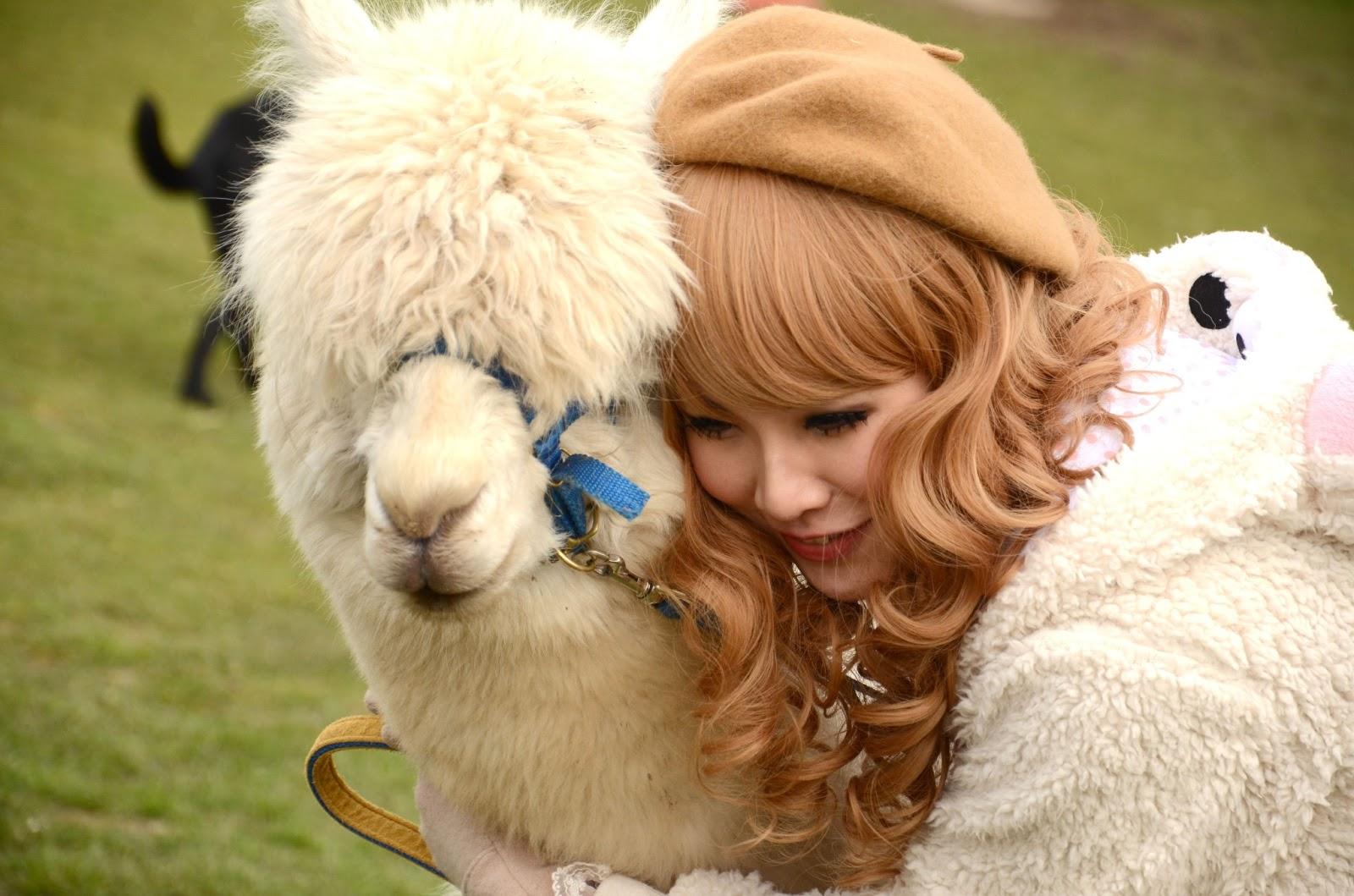 WildLife: Alpaca Little Cute Animal